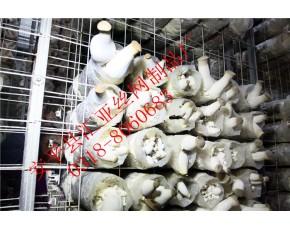 蘑菇网片-蘑菇网架,菌包置架