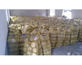 山东临沂供应平菇菌种