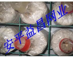 供应河北益昌食用菌网片