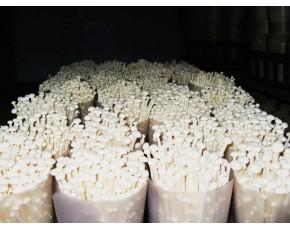 金针菇菌种菌棒