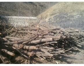 大量供应木屑,柞木屑,栗木屑,硬杂木等木屑和锯末.梨木。