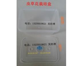 虫草花 栽培盒