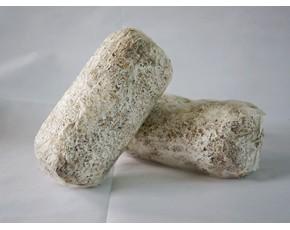 供应高温平菇菌种(量大从优)