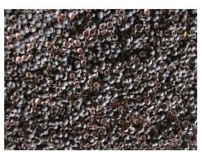 棉籽壳、莲子壳