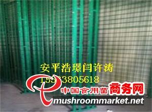 杏鲍菇网格架