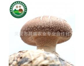昌盛宝菇优质鲜香菇精挑细选厂家直销批发一件500kg起批