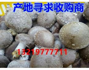真诚寻求食用菌架子香菇鲜菇收购商