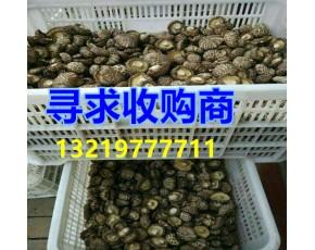 食用菌鲜香菇干香菇 椴木干菇 干黑木耳 核桃