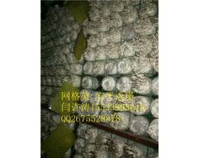 蘑菇网片,蘑菇网,养蘑菇网片,河北安平浩璟