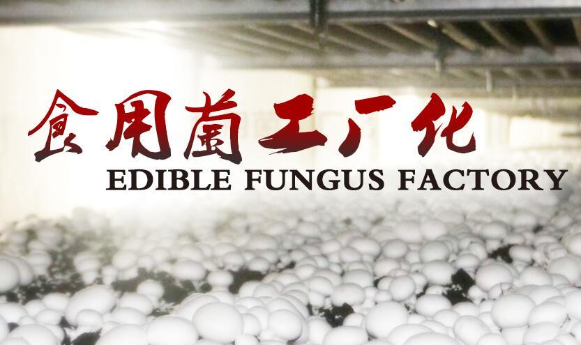 食用菌工厂化