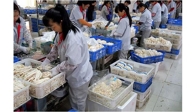 江西:赣州工厂化食用菌远销海外