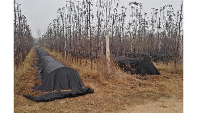 河南:九龙实业公司流转土地建立羊肚菌种植研发基地