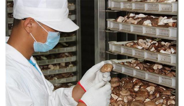 内蒙古:漠菇生物香菇菌棒顺利出口韩国