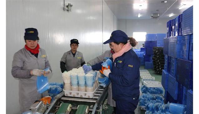 中国食用菌商务网市场总监陈彦一行到山东友和菌业公司考察调研