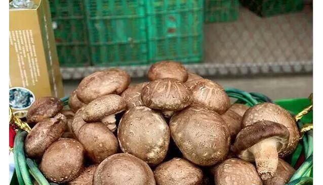 甘肃:徽县依托自然资源优势发展香菇木耳等食用菌
