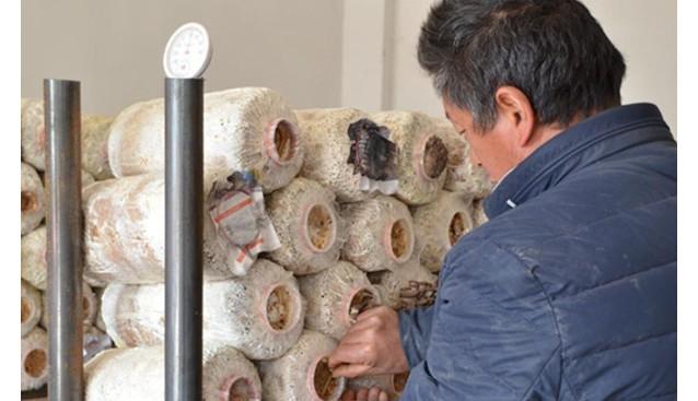 贵州:威宁县李寿云种食用菌闯致富路