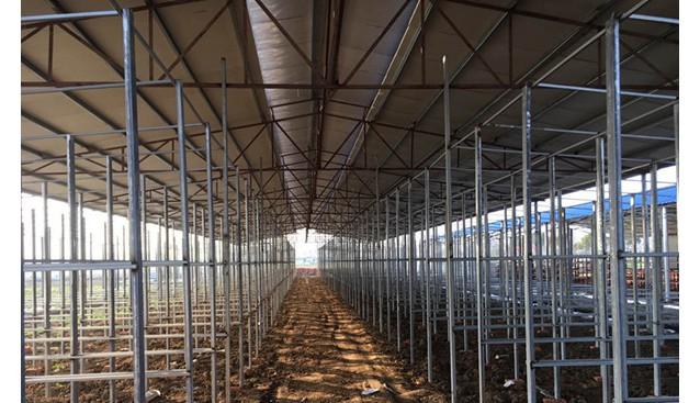 安徽:淮南菇盛食用菌公司工厂化秀珍菇项目即将投产