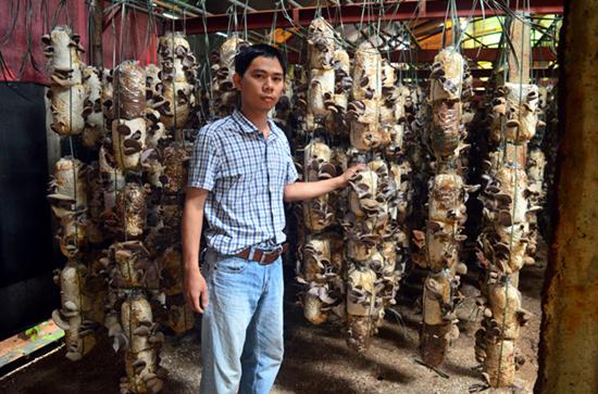 越南:白領回鄉培育食用菌 收入可觀