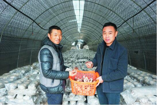 贵州:湄潭县茅坪镇发展食用菌产业助农