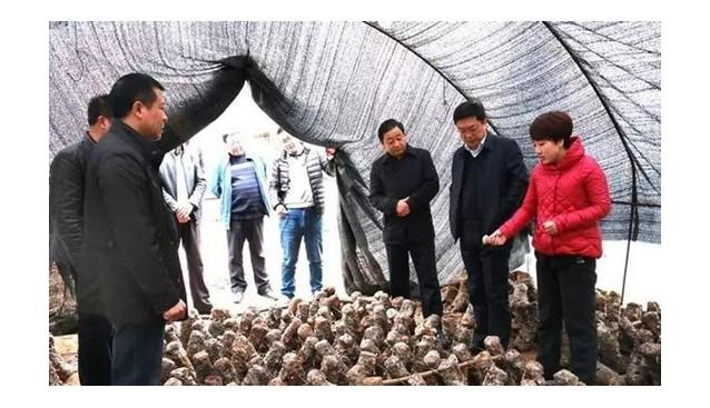 甘肃:两当县领导深入乡镇调研食用菌产业发展情况
