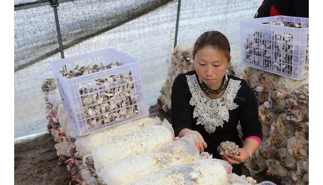 河南:信阳起农农业专