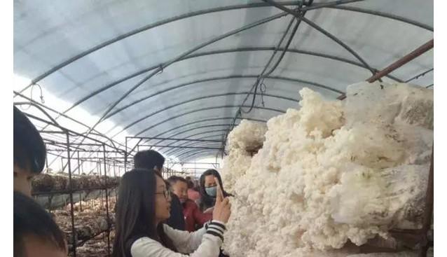 河北:承德平泉县羊肚菌、雪玉松茸采摘活动上线