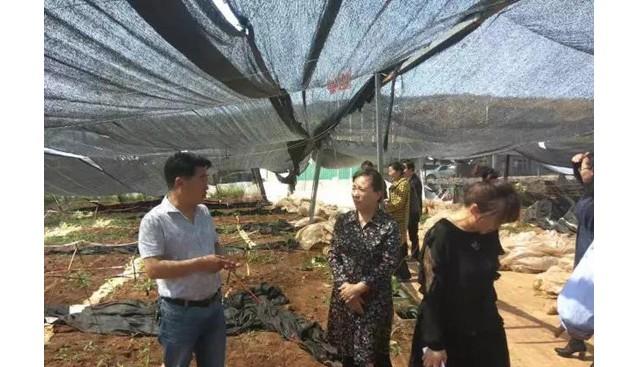 河南省相关部门验收九龙公司羊肚菌示范基地