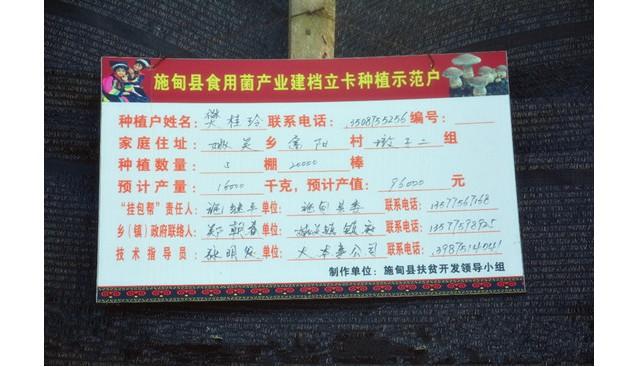 云南:保山施甸县实施香菇精准脱贫 助力农民脱贫致富