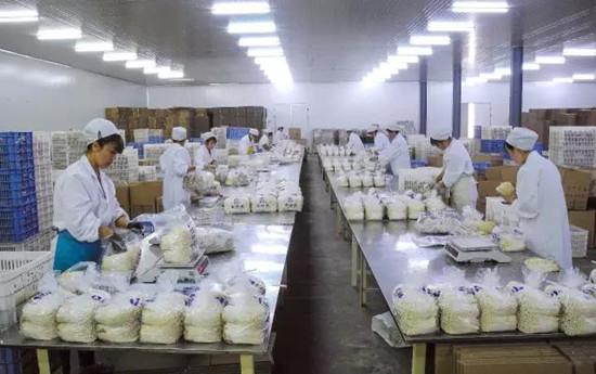甘肃:天水众兴菌业被省政府授予省长金