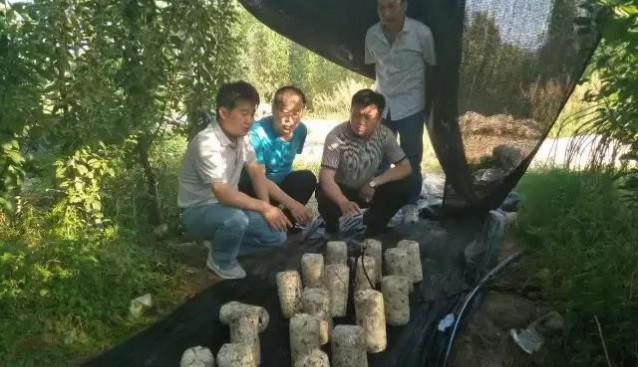 河南三门峡市供销社主任带队参观考察九龙公司陕州区羊肚菌基地