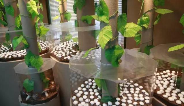 上海联中食用菌专业合作社挂牌成为质量安全产研结合示范点