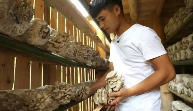 贵州:黔东南台江县食用菌大丰收 日产量达700-800斤