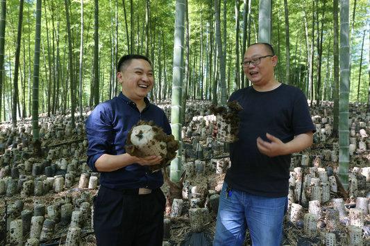 四川:泸州纳溪区楠竹林套种黑木耳循环利用得双赢