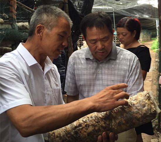 食用菌技术专家刘德育亲赴卢氏县指导花菇生产技术