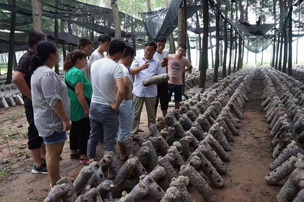 河南:西华县绿富组织学员在食用菌基地现场培训