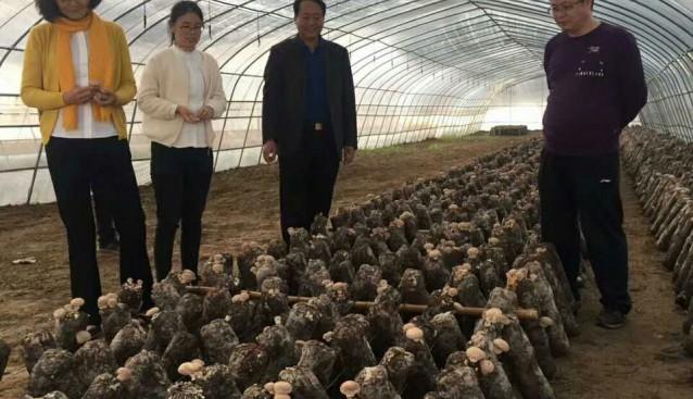 河南:文晴博士调研世纪香工厂化生产基地和食用菌产业扶贫基地