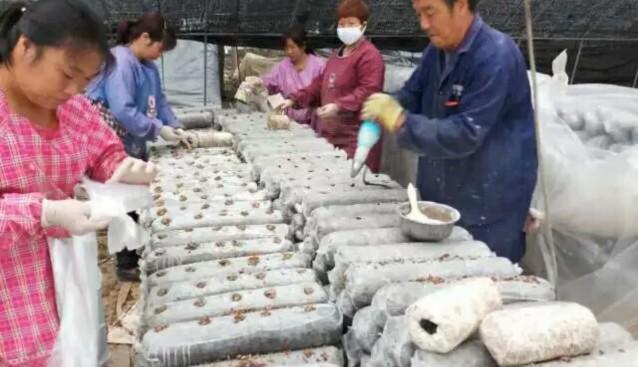 河南:鸿丰菌业进入香菇生产季