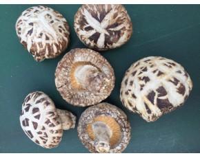 昌盛宝菇河南灵宝天白花菇5cm以上肉厚厂家批发直供