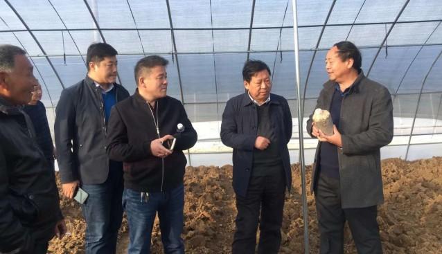河南:许昌市建安区副区长孙俊洲等相关领导到食用菌基地调研