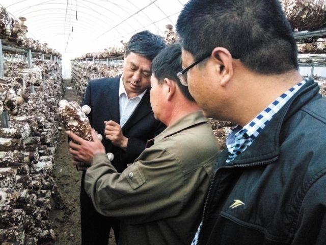 """""""蘑菇县长""""通占元:把小蘑菇发展成了精准脱贫、富民強县的大产业"""