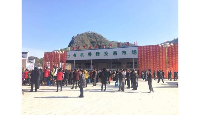 湖北:南漳整合有机产业品牌 有机香菇交易市场开业