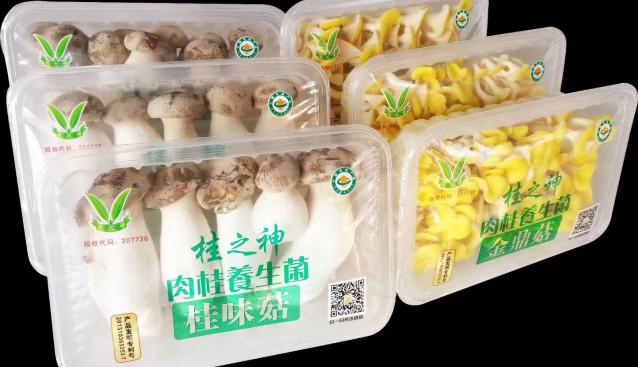 广东:桂之神食用菌产品喜获广东省名牌产品称号