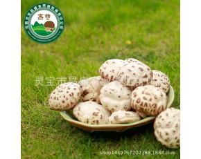 昌盛宝菇 精品厚白干花菇500g 手挑好货礼盒装送礼厂家直销