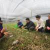 80后小伙龙新:返乡种植羊肚菌带动村民致富