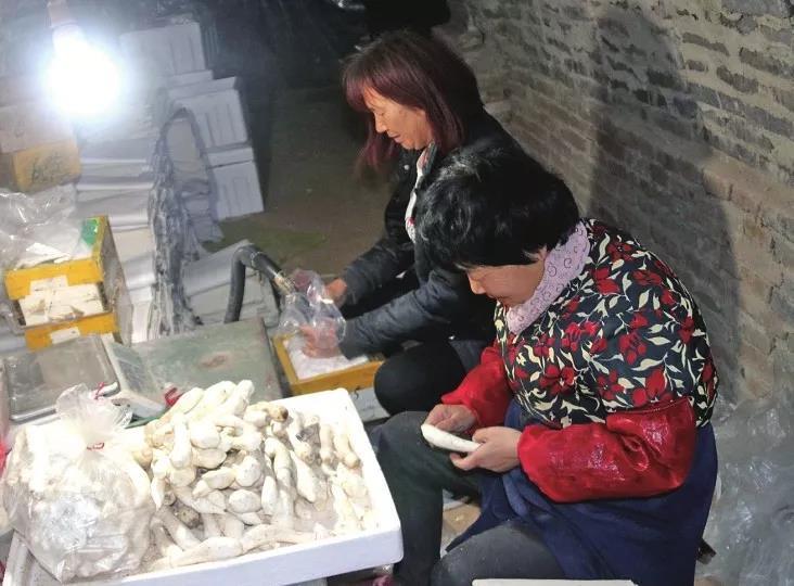 山东:平阴县土洞养殖鸡腿菇成特色