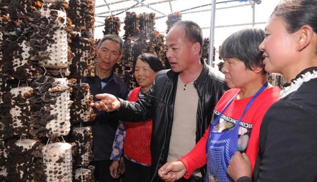 陕西:柞水县全力打造木耳小镇