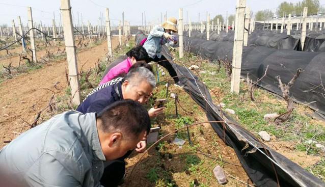 河南:陕州农牧局检验科赴九龙公司羊肚菌基地考察