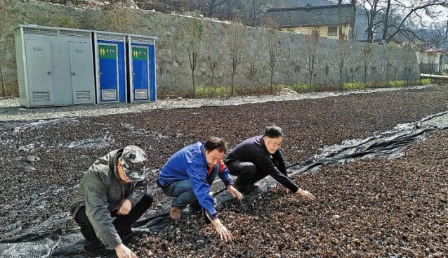 陕西:商洛木耳产业带来脱贫新希望