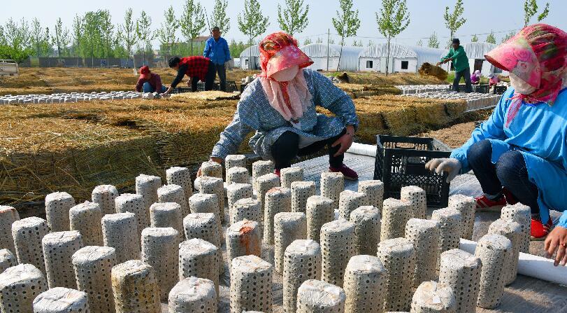 安徽:黑木耳产业发展助民脱贫增收