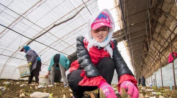 辽宁:女子创业种植羊肚菌喜获丰收